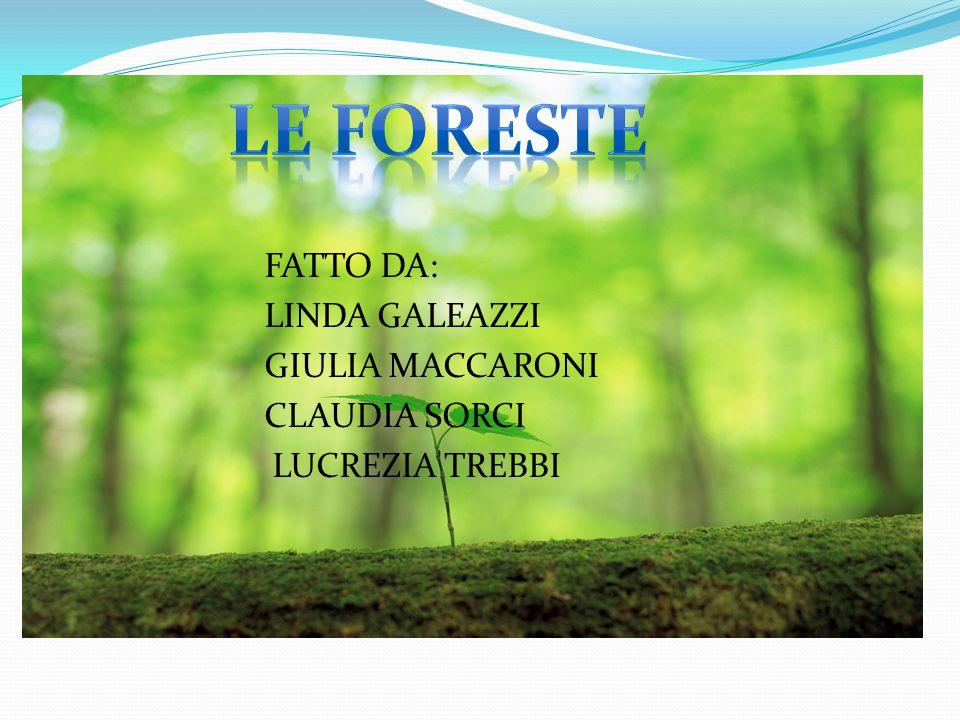 LE FORESTE FATTO DA: LINDA GALEAZZI GIULIA MACCARONI CLAUDIA SORCI