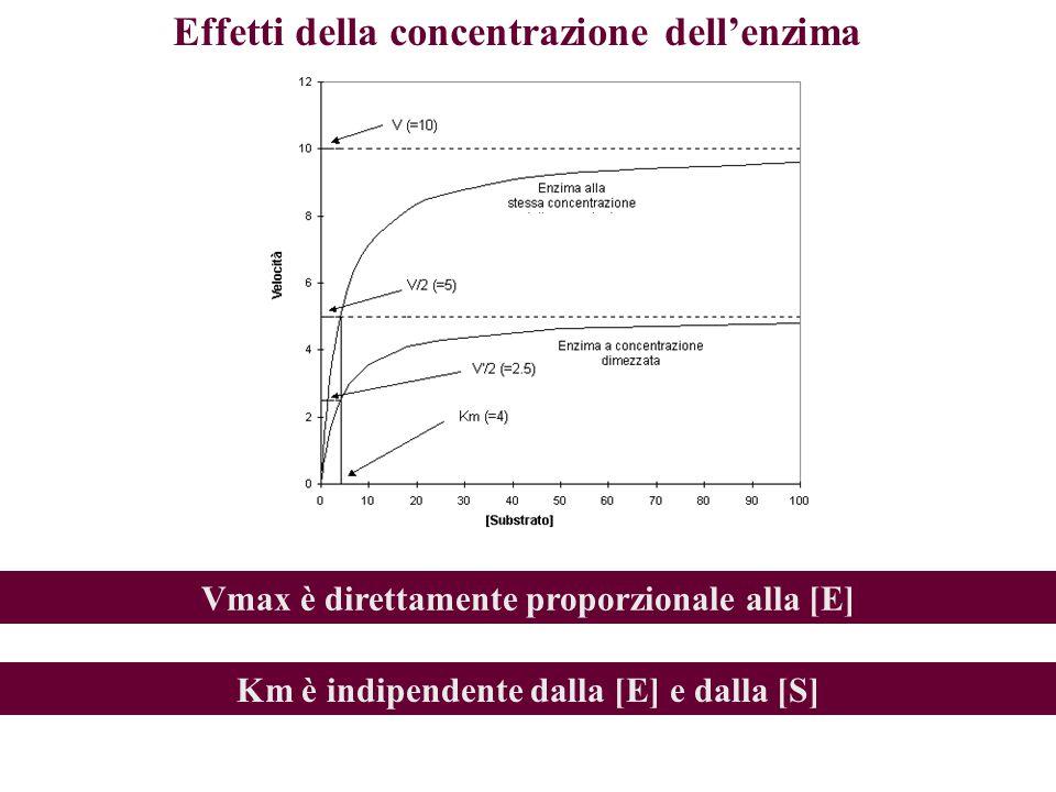 Effetti della concentrazione dell'enzima