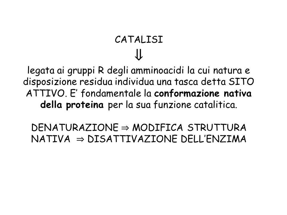 CATALISI ⇓ legata ai gruppi R degli amminoacidi la cui natura e disposizione residua individua una tasca detta SITO ATTIVO.