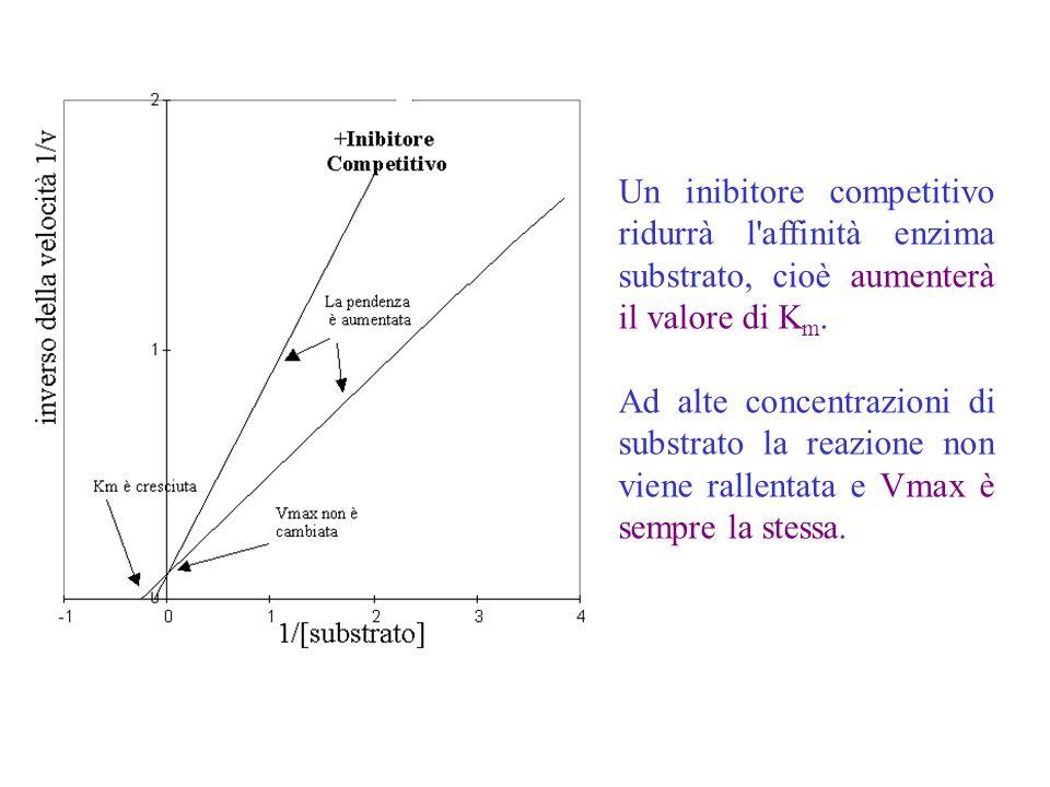 Un inibitore competitivo ridurrà l affinità enzima substrato, cioè aumenterà il valore di Km.