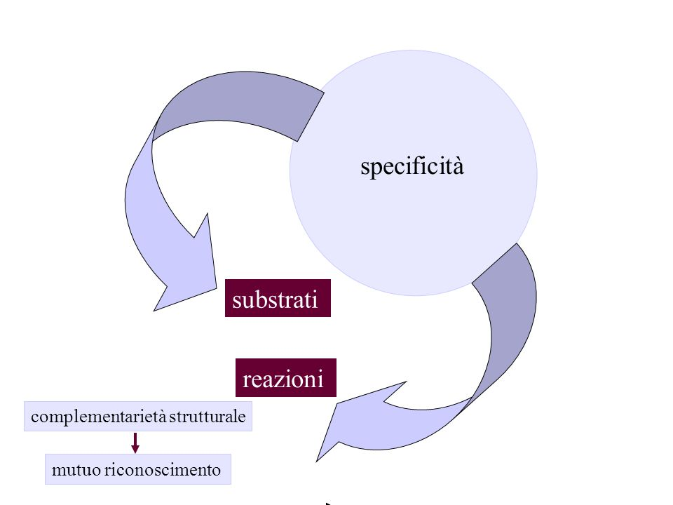 specificità substrati reazioni complementarietà strutturale
