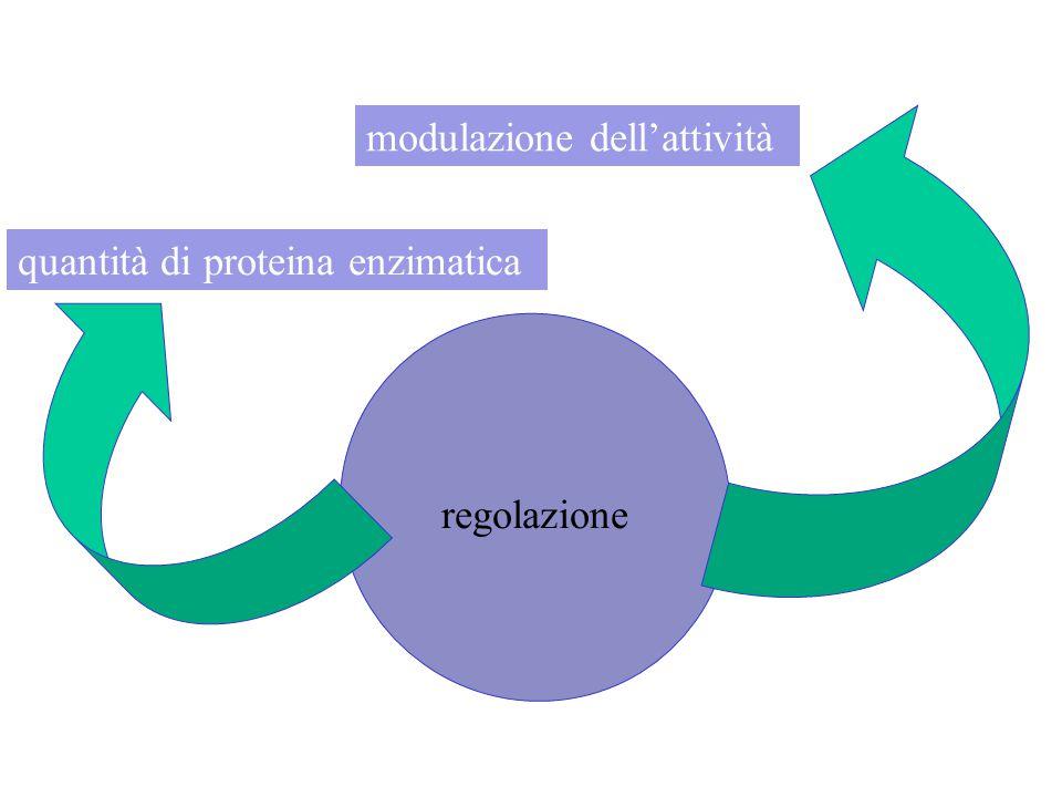 modulazione dell'attività