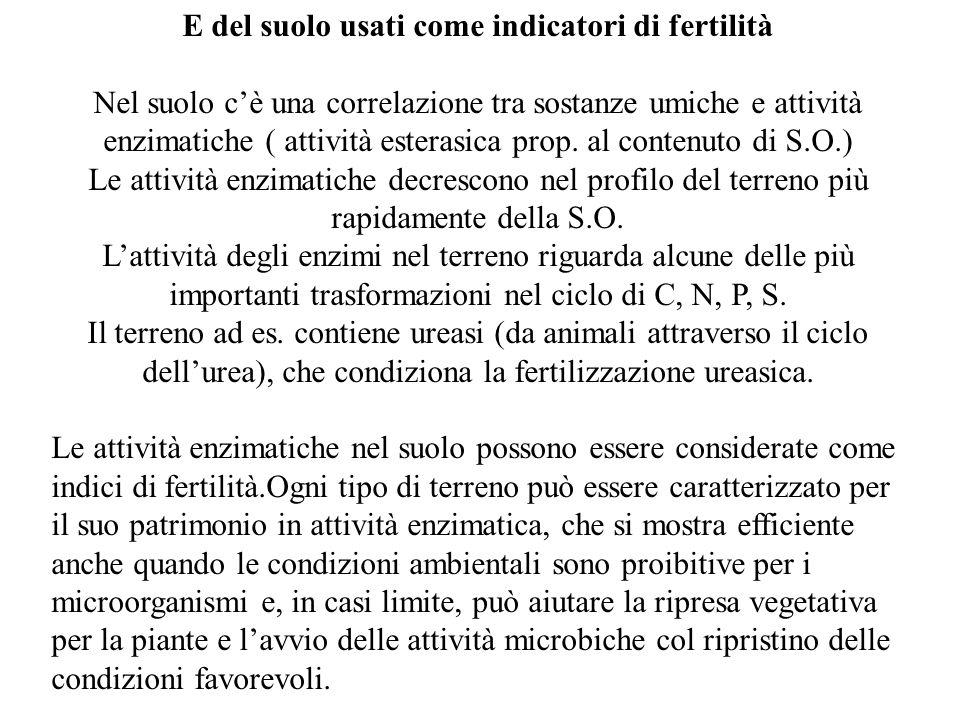 E del suolo usati come indicatori di fertilità