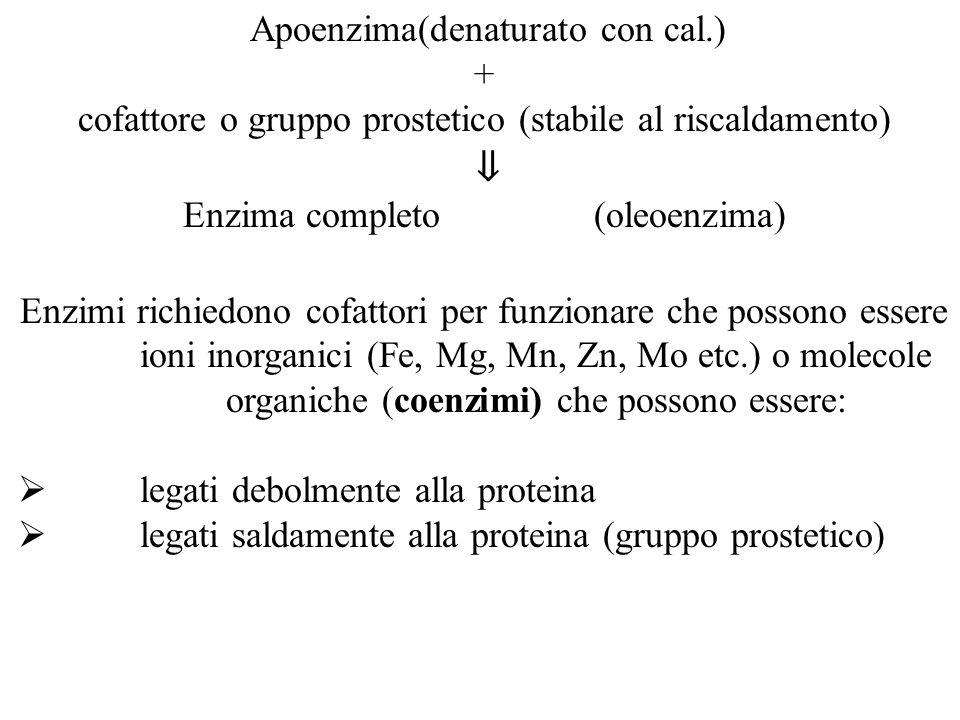 Apoenzima(denaturato con cal.) +