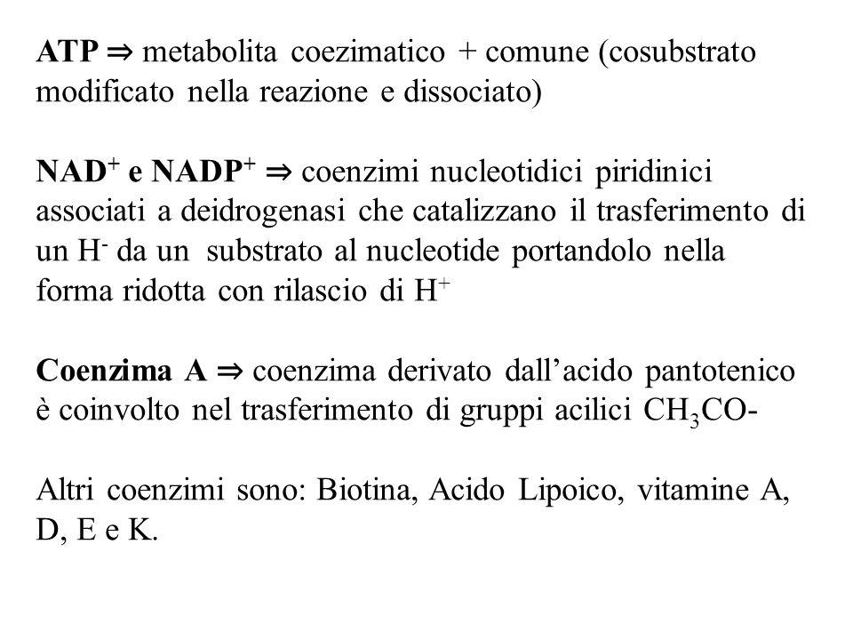 ATP ⇒ metabolita coezimatico + comune (cosubstrato modificato nella reazione e dissociato)