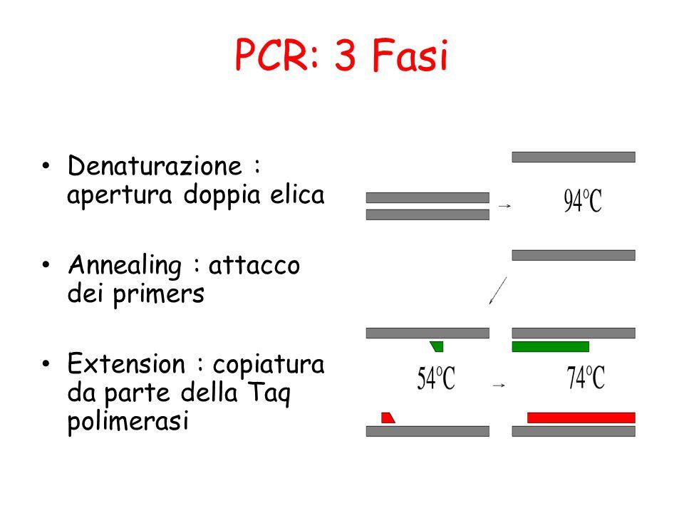 PCR: 3 Fasi Denaturazione : apertura doppia elica