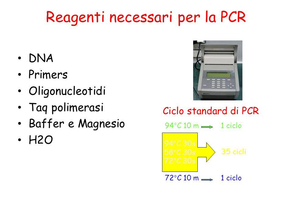 Reagenti necessari per la PCR