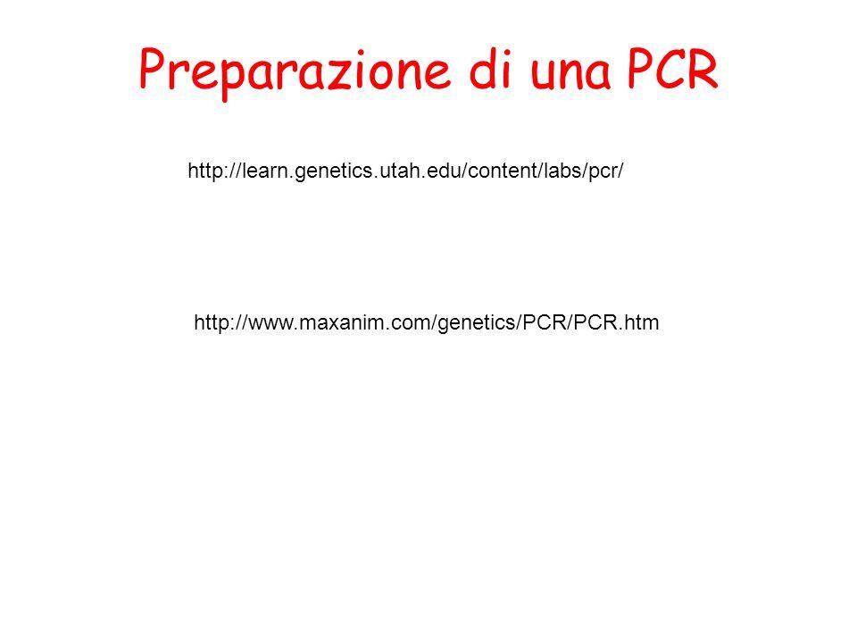 Preparazione di una PCR
