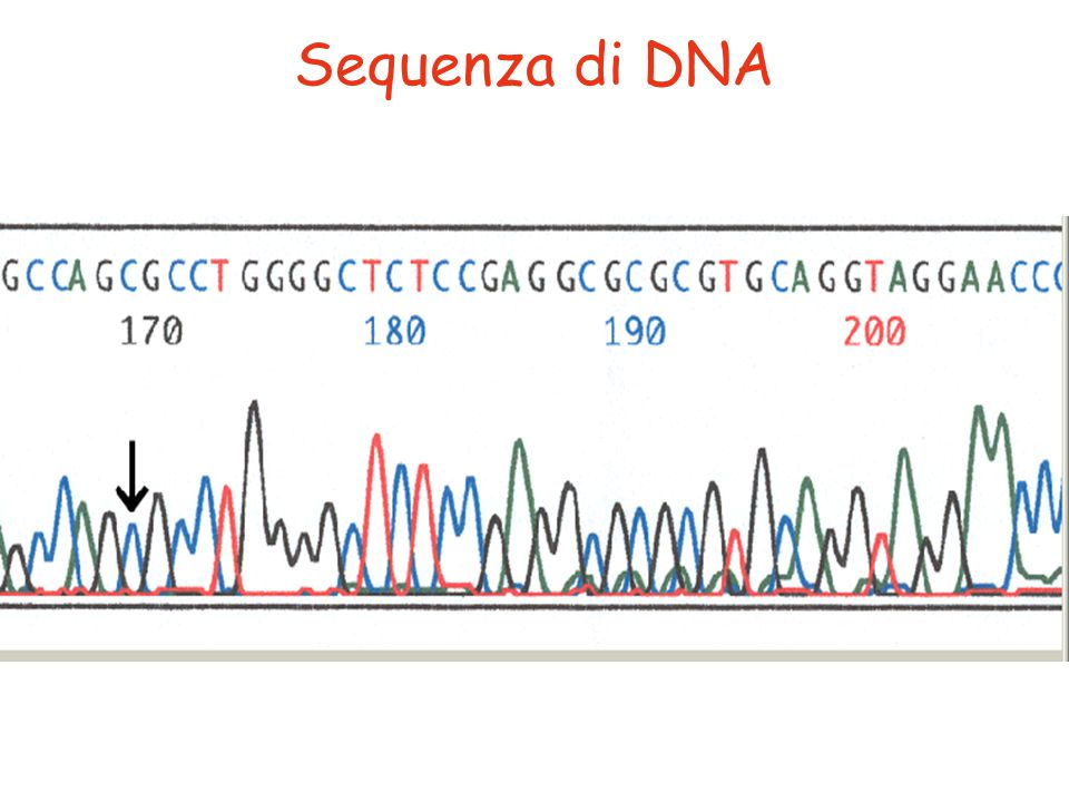 Sequenza di DNA
