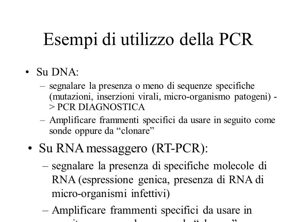 Esempi di utilizzo della PCR