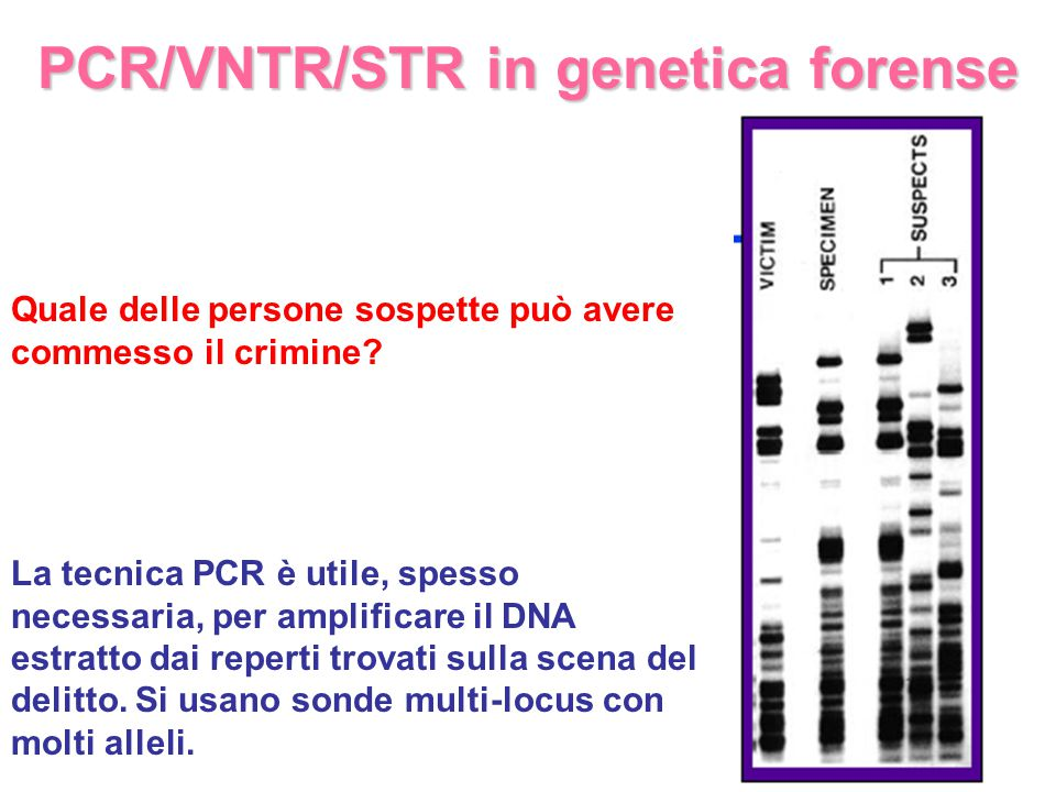 PCR/VNTR/STR in genetica forense