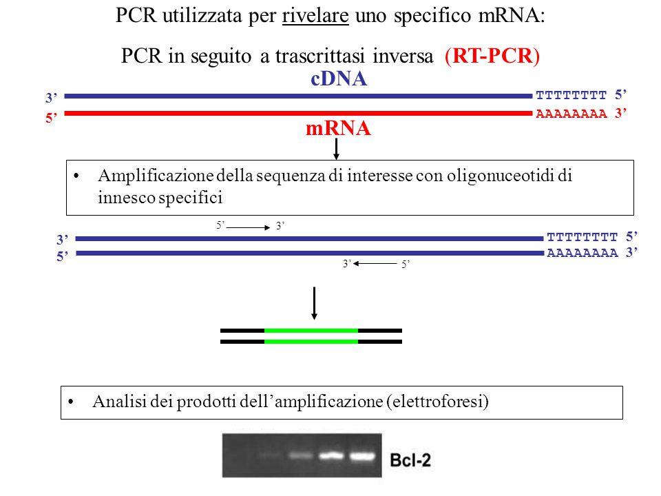 PCR utilizzata per rivelare uno specifico mRNA: PCR in seguito a trascrittasi inversa (RT-PCR)