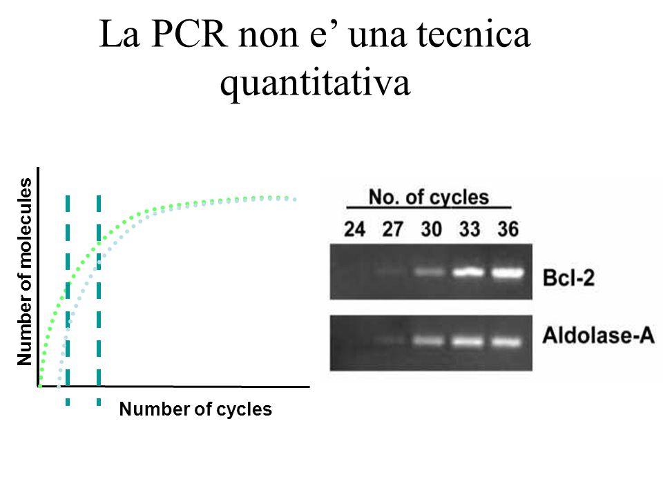 La PCR non e' una tecnica quantitativa