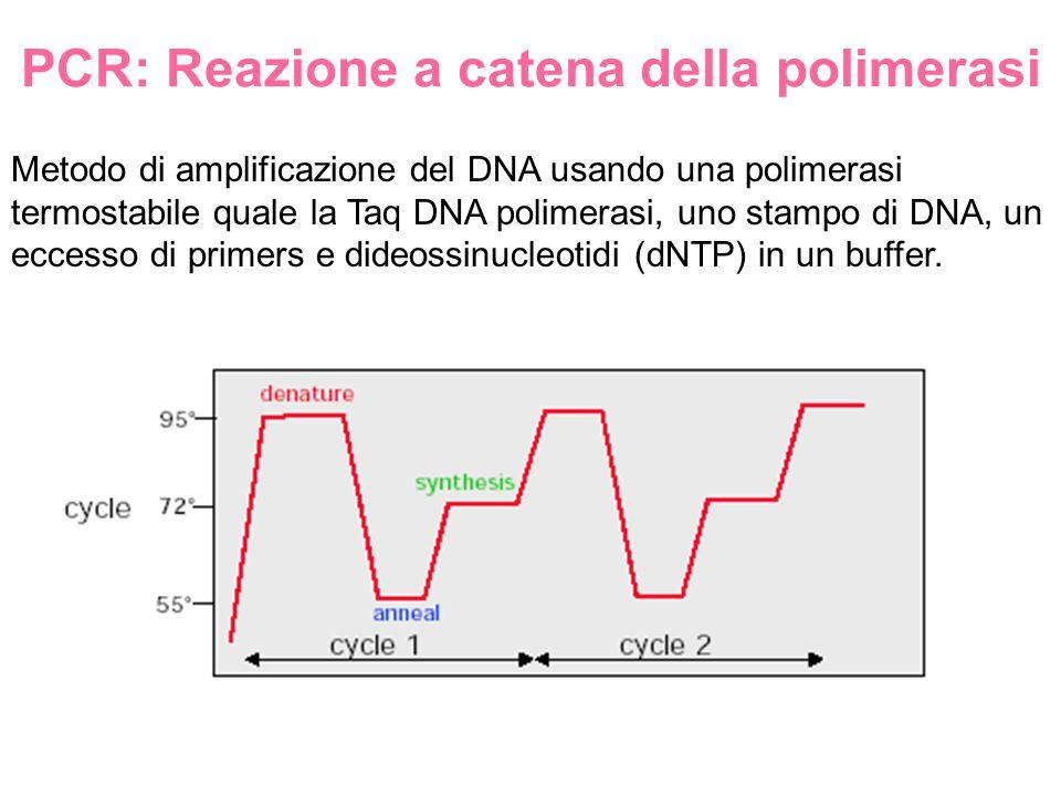 PCR: Reazione a catena della polimerasi