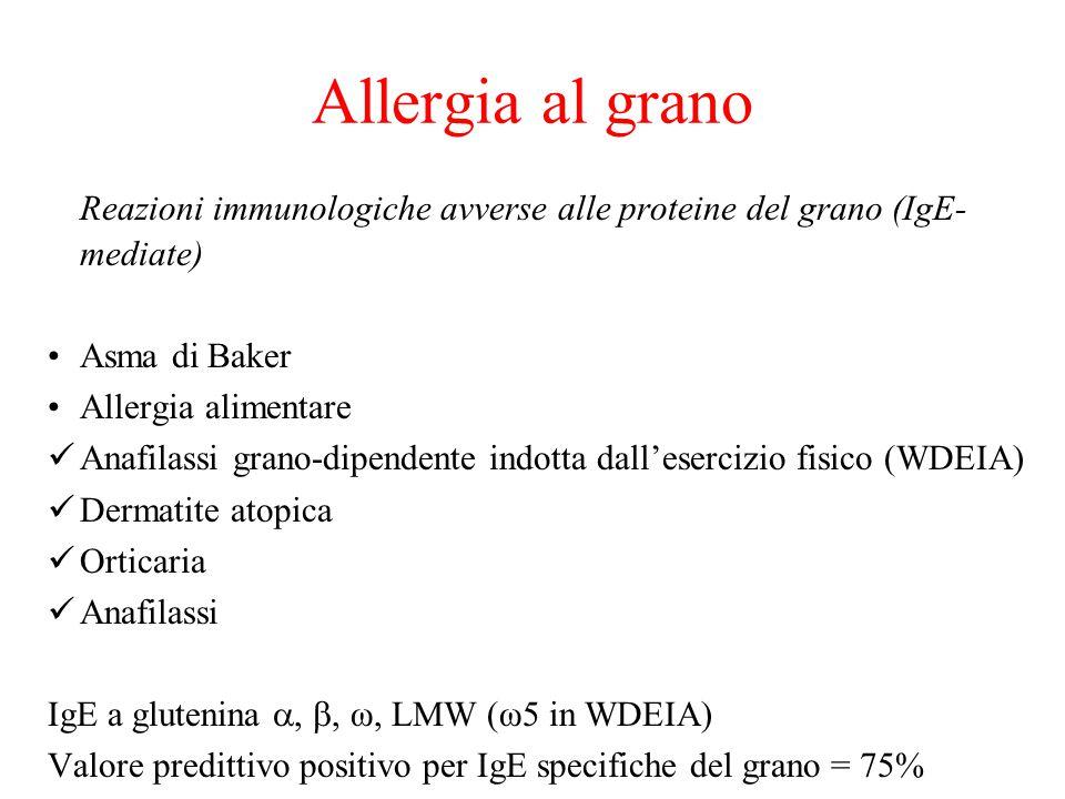 Allergia al grano Reazioni immunologiche avverse alle proteine del grano (IgE-mediate) Asma di Baker.
