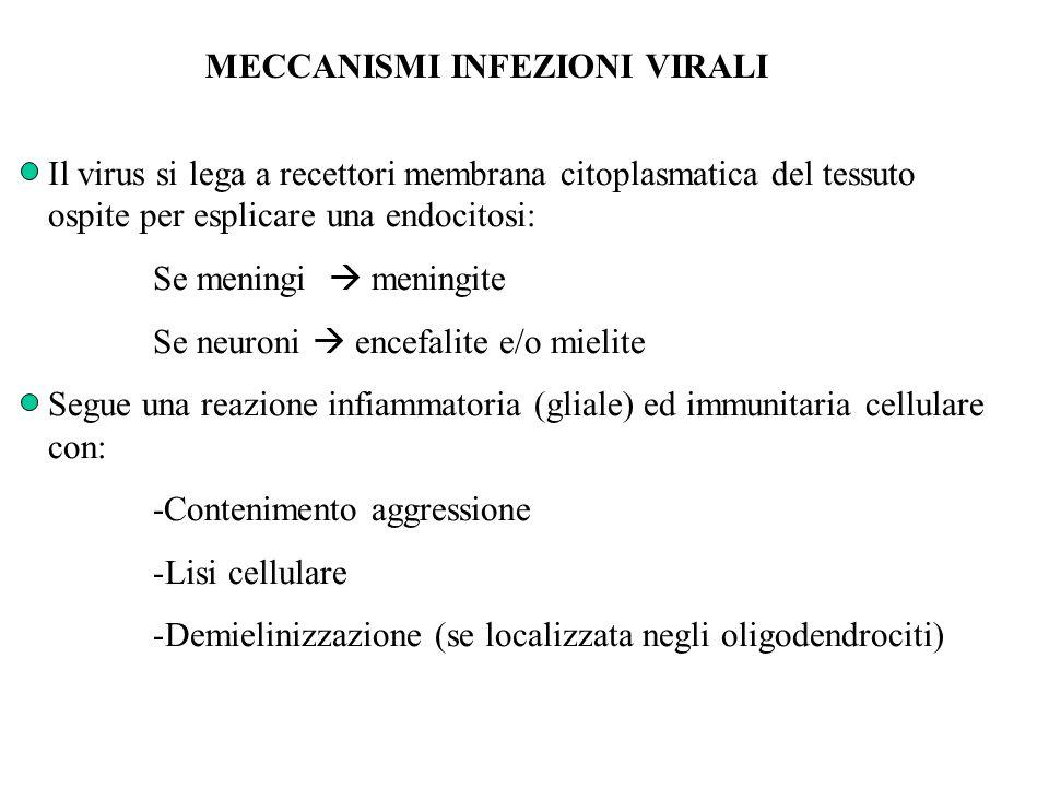 MECCANISMI INFEZIONI VIRALI