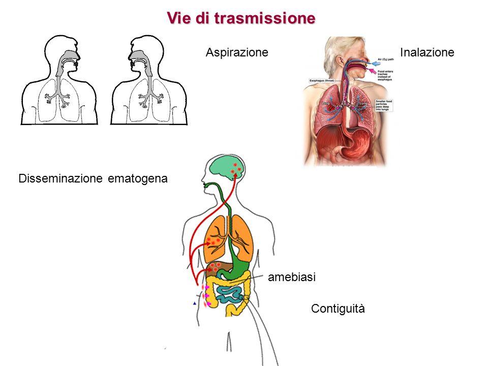 Vie di trasmissione Aspirazione Inalazione Disseminazione ematogena