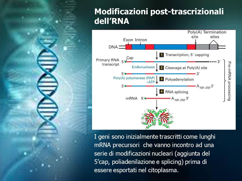 Modificazioni post-trascrizionali dell'RNA