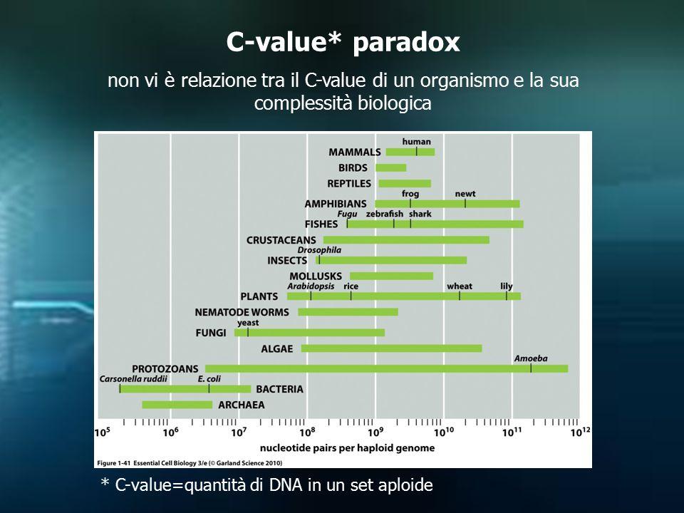 C-value* paradox non vi è relazione tra il C-value di un organismo e la sua complessità biologica.