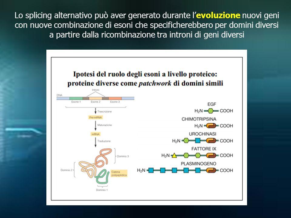 Lo splicing alternativo può aver generato durante l'evoluzione nuovi geni con nuove combinazione di esoni che specificherebbero per domini diversi a partire dalla ricombinazione tra introni di geni diversi