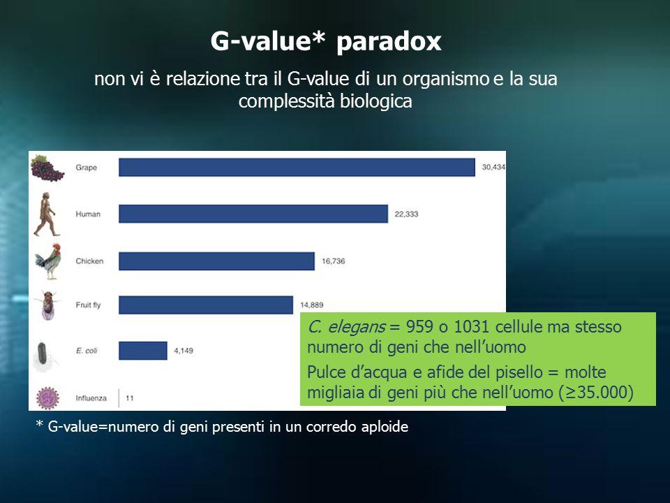 G-value* paradox non vi è relazione tra il G-value di un organismo e la sua complessità biologica.