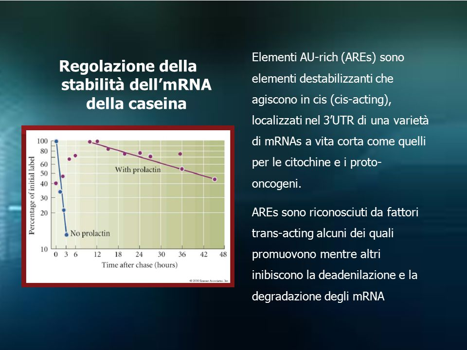 Regolazione della stabilità dell'mRNA della caseina