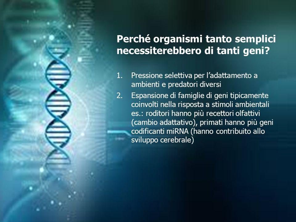 Perché organismi tanto semplici necessiterebbero di tanti geni