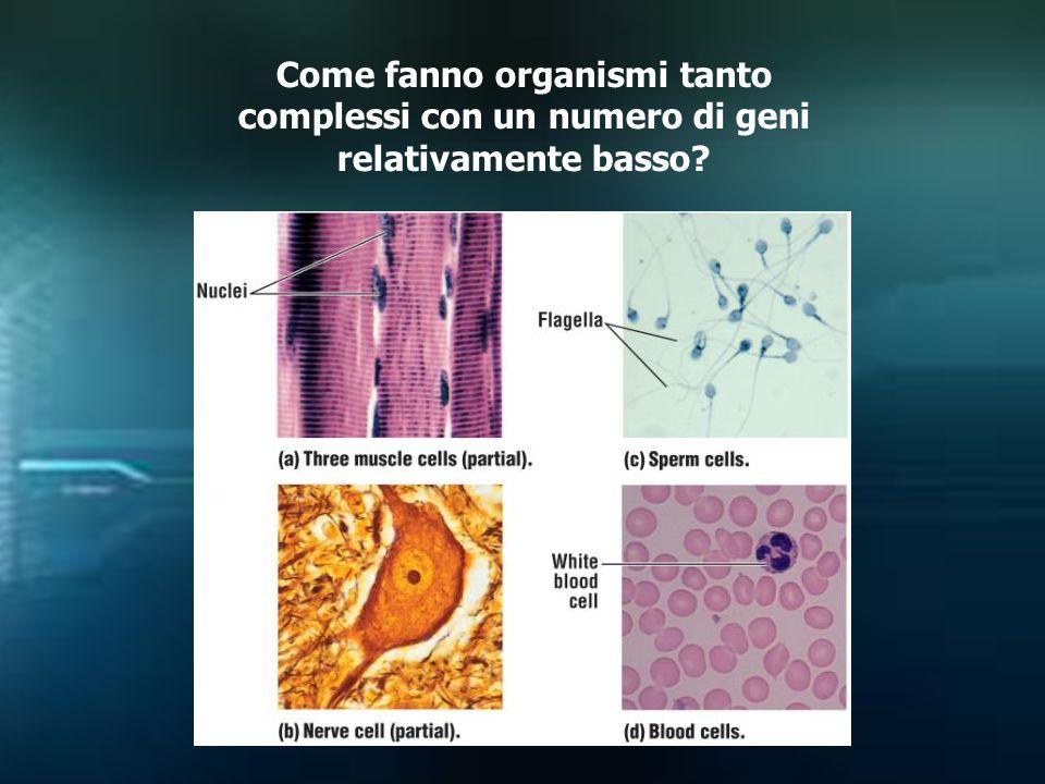 Come fanno organismi tanto complessi con un numero di geni relativamente basso