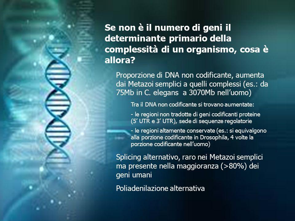 Se non è il numero di geni il determinante primario della complessità di un organismo, cosa è allora
