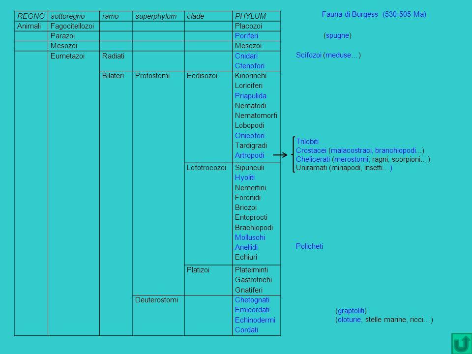 Fauna di Burgess (530-505 Ma) (spugne) Scifozoi (meduse…) Trilobiti. Crostacei (malacostraci, branchiopodi...)