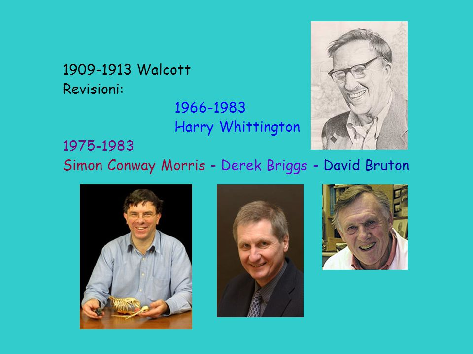 1909-1913 Walcott Revisioni: 1966-1983. Harry Whittington.