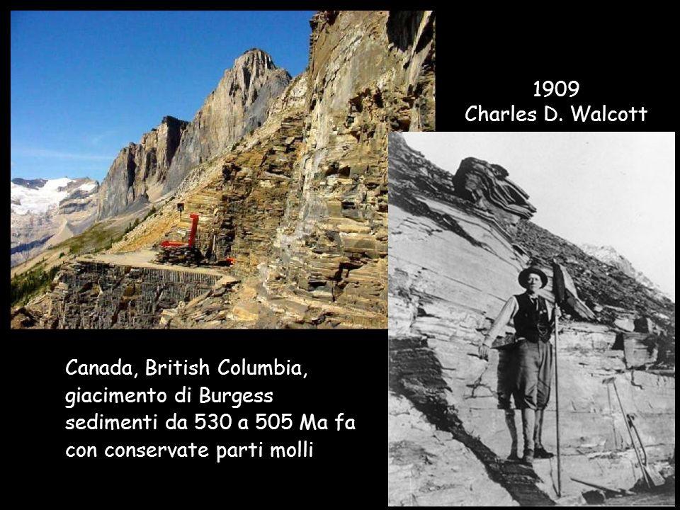 1909 Charles D. Walcott. Canada, British Columbia, giacimento di Burgess. sedimenti da 530 a 505 Ma fa.