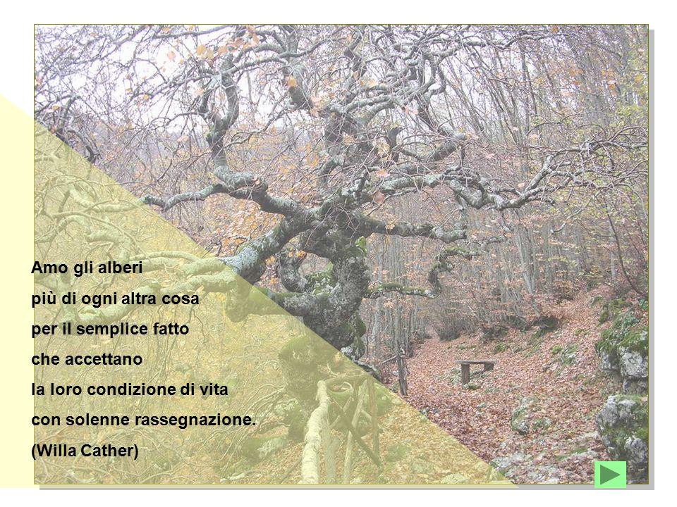 Amo gli alberi più di ogni altra cosa. per il semplice fatto. che accettano. la loro condizione di vita.