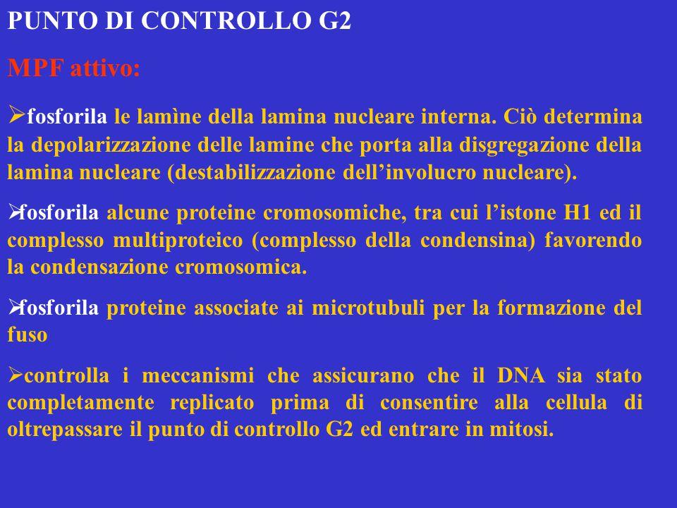 PUNTO DI CONTROLLO G2 MPF attivo:
