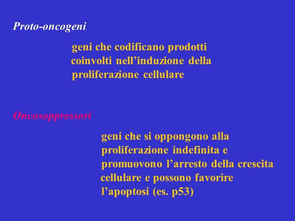 Proto-oncogeni geni che codificano prodotti coinvolti nell'induzione della proliferazione cellulare.