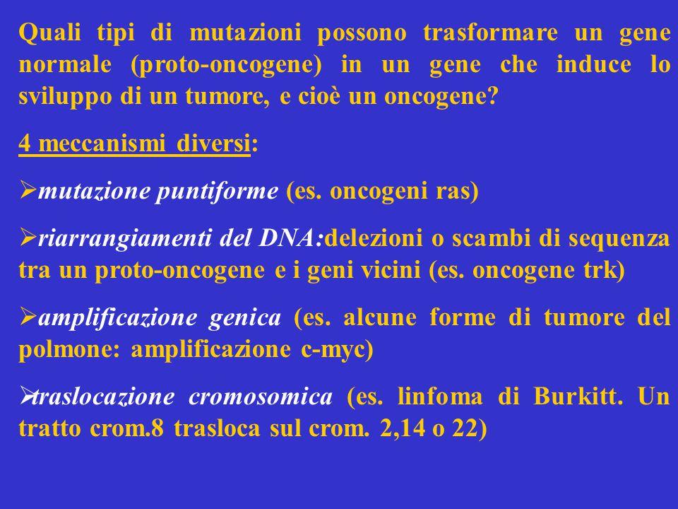 Quali tipi di mutazioni possono trasformare un gene normale (proto-oncogene) in un gene che induce lo sviluppo di un tumore, e cioè un oncogene