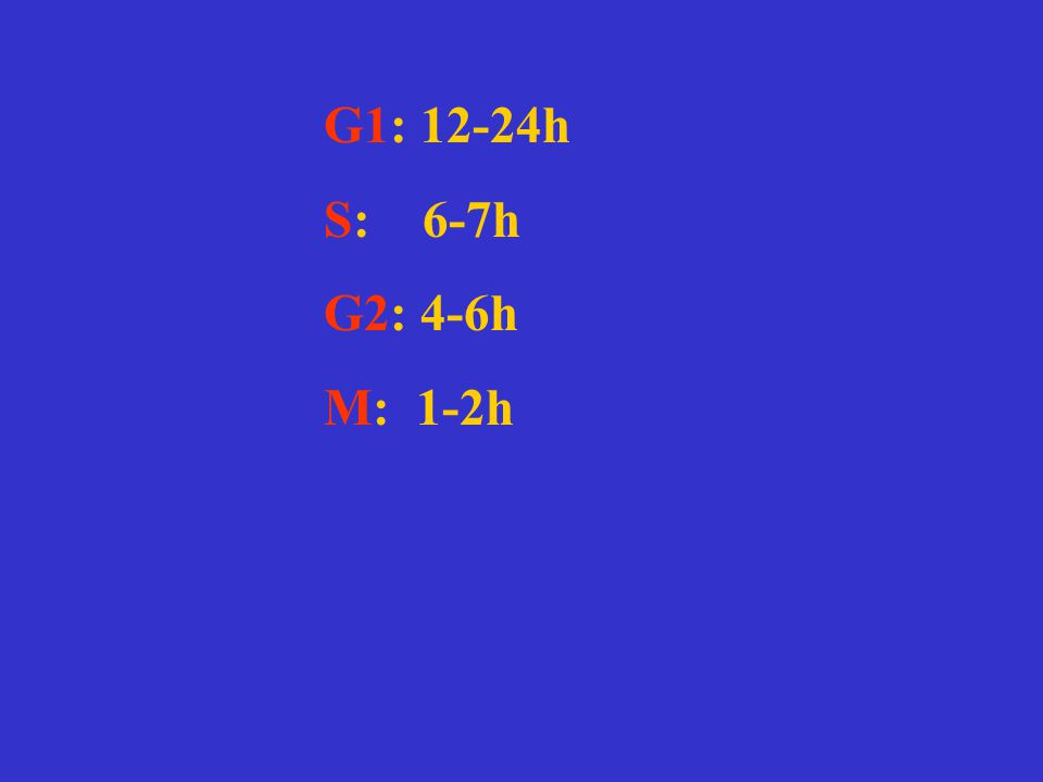 G1: 12-24h S: 6-7h G2: 4-6h M: 1-2h