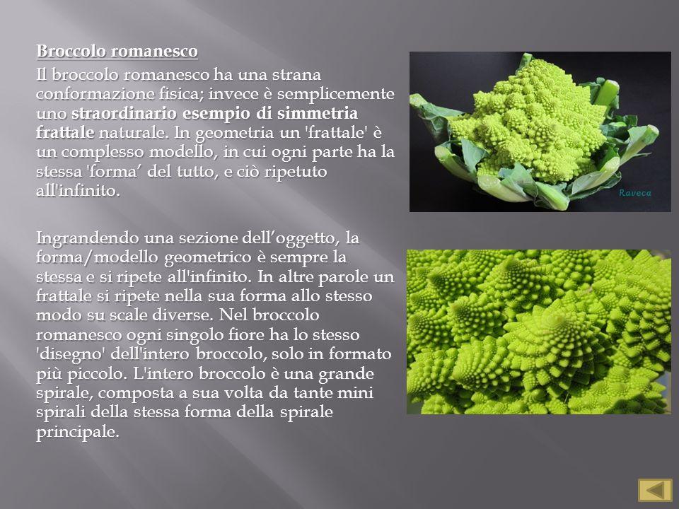 Broccolo romanesco Il broccolo romanesco ha una strana conformazione fisica; invece è semplicemente uno straordinario esempio di simmetria frattale naturale.