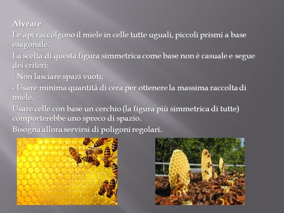 Alveare Le api raccolgono il miele in celle tutte uguali, piccoli prismi a base esagonale.