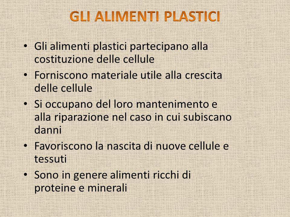 GLI ALIMENTI PLASTICI Gli alimenti plastici partecipano alla costituzione delle cellule. Forniscono materiale utile alla crescita delle cellule.