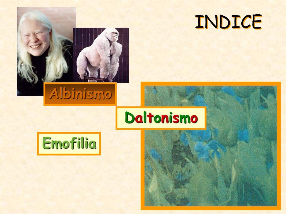 INDICE Albinismo Daltonismo Emofilia