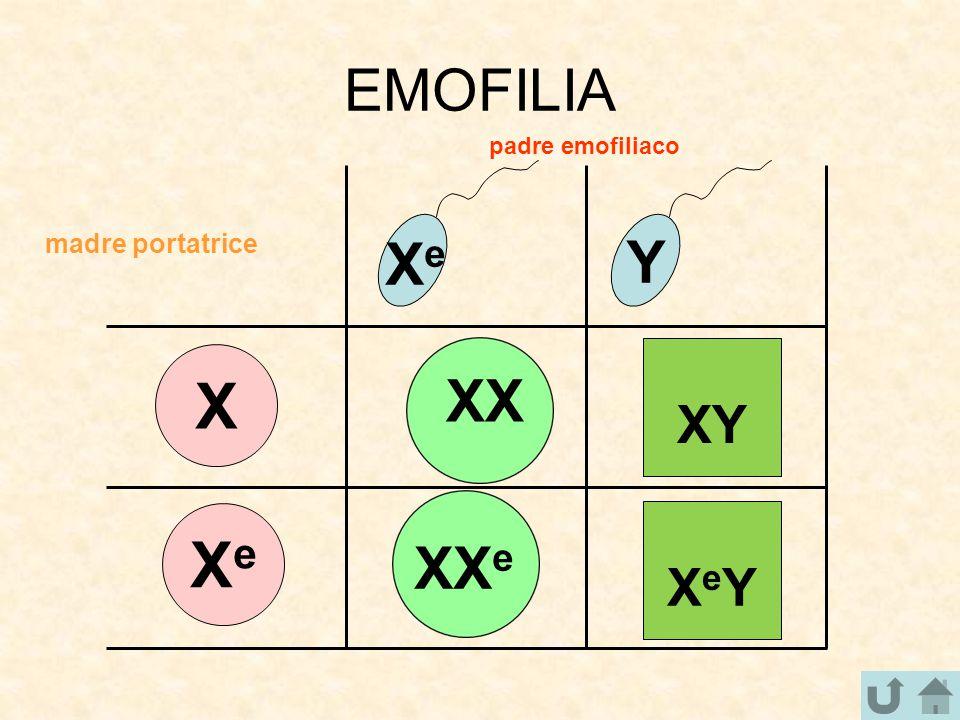 EMOFILIA padre emofiliaco madre portatrice Xe Y XY X XX XeY Xe XXe