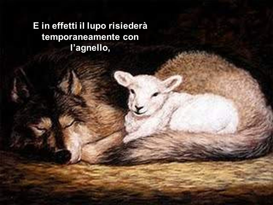 E in effetti il lupo risiederà temporaneamente con l'agnello,