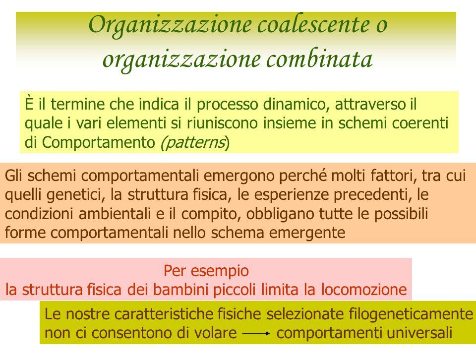 Organizzazione coalescente o organizzazione combinata