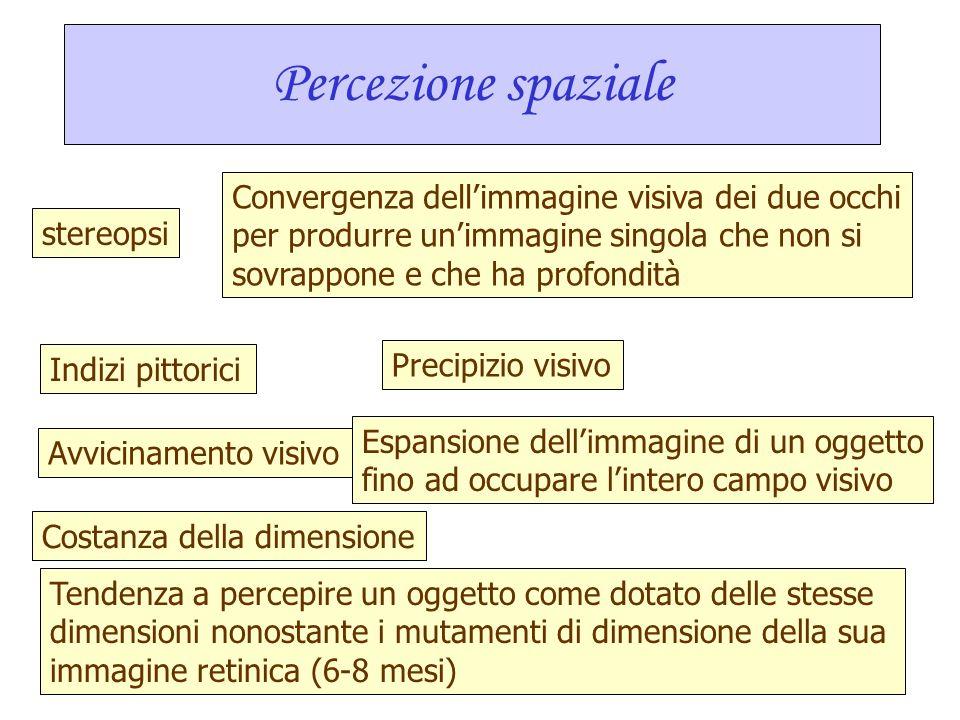 Percezione spaziale Convergenza dell'immagine visiva dei due occhi