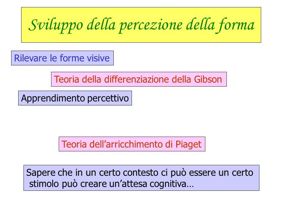 Sviluppo della percezione della forma