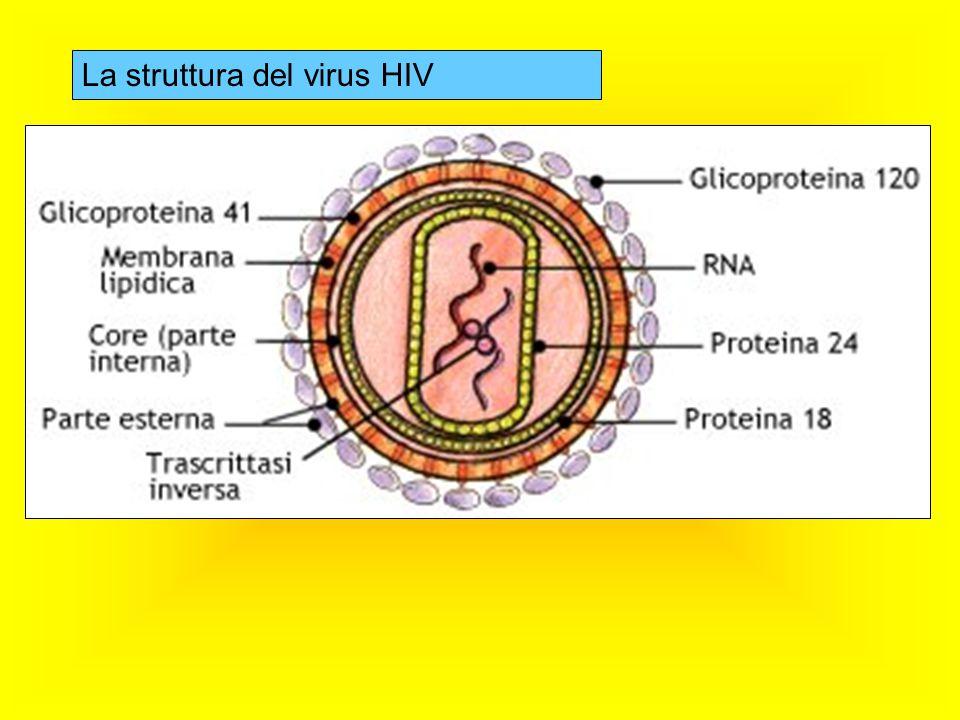 La struttura del virus HIV
