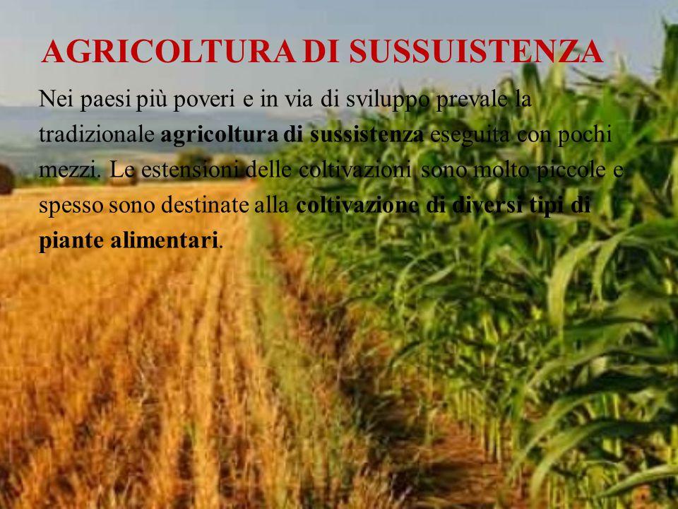 AGRICOLTURA DI SUSSUISTENZA