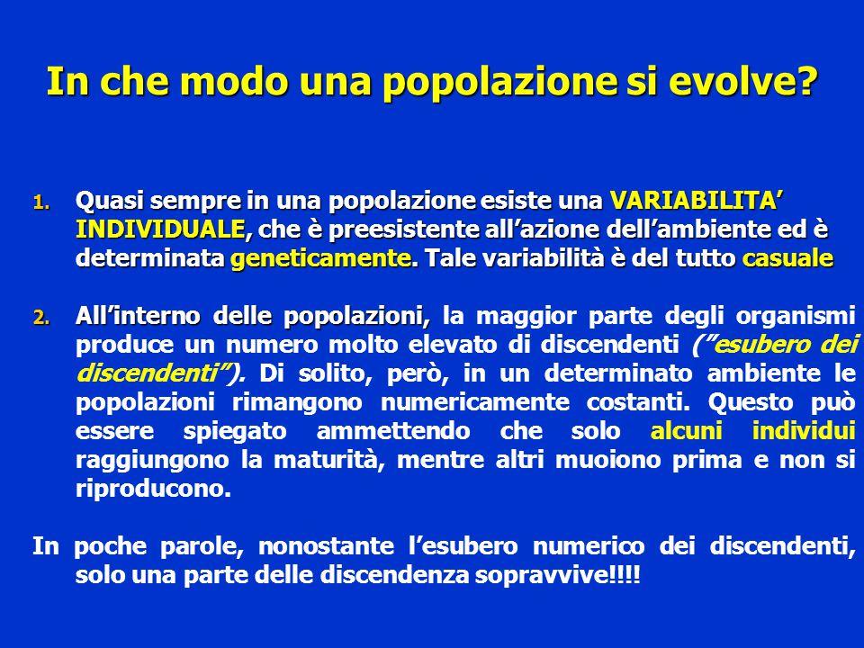 In che modo una popolazione si evolve