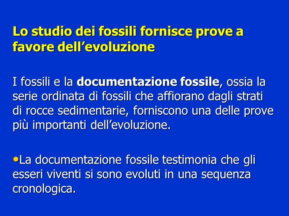 Lo studio dei fossili fornisce prove a favore dell'evoluzione
